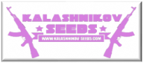 Just Feminized Seeds Bank are Official Registered Retailers of Kalahnikov Cannabis Seeds - Official Dealers Distributors